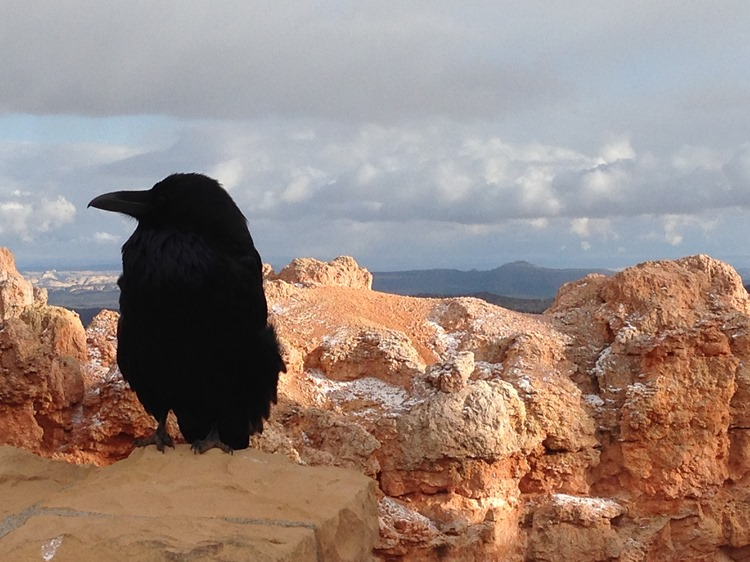 Bryce Canyon National Park, Utah | A Life Exotic
